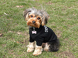 Dog Clothing Small Dog Clothes New York Pet Clothes