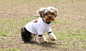 Dog Tshirt Dog Clothing New York Dog Clothes