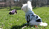 Dog Accessories Fashionable Ruffluv Clothing For Dogs