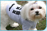 Dog Blanket Dog Clothing New York Dog Clothes