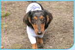 Doggy Clothes Fashionable Dog Clothes Dog Tshirt