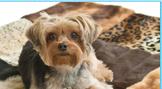 Stylish Clothing For Dogs Stylish Clothing For Dogs Dog Friendly Parks