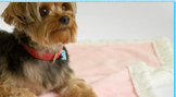 Dog Accessories Pet Outfits Fashionable Clothing For Dogs