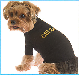 Doggy Clothes Stylish Clothing For Dogs Dog Tshirt