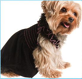 Dog Tshirt Dog Clothing Company Dog Parks
