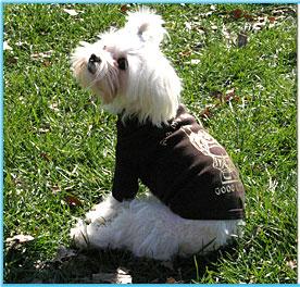 Doggy Clothes Stylish Clothing For Dogs Dog Tshirt